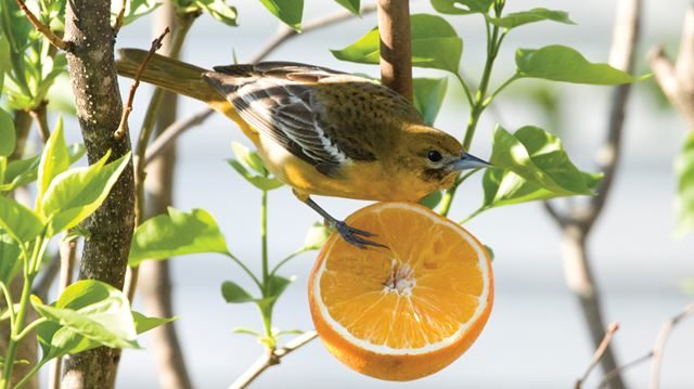 Protecting Bird Habitats Across America